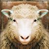 لعبة بازل خروف العيد
